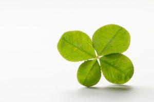 植物で金運を引き寄せる風水術!